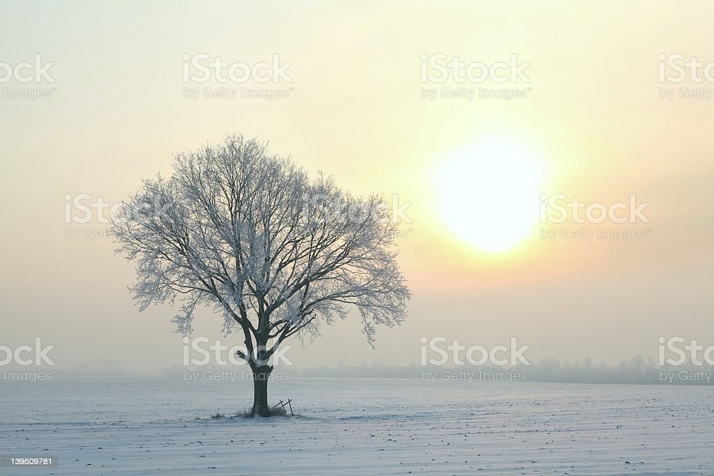 Frosted tree at dawn stock photo
