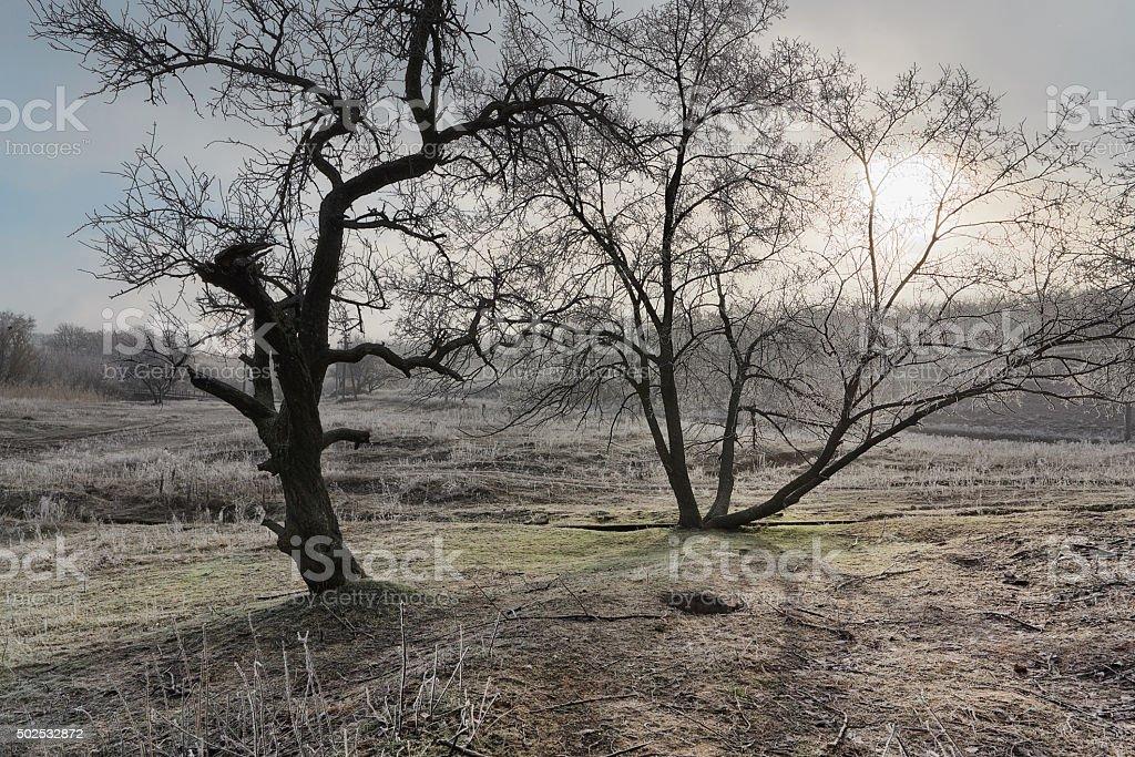 Frosted árbol en la colina foto de stock libre de derechos