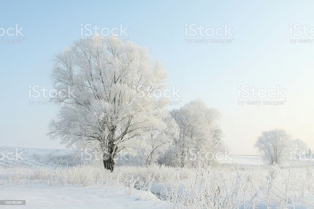 Frosted trees illuminated by the morning sun royalty-free stock photo
