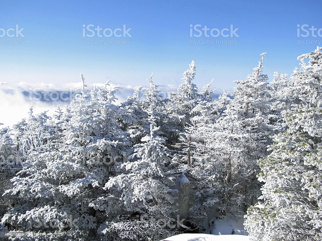 Frosted Trees on Mt. Hancock in November stock photo