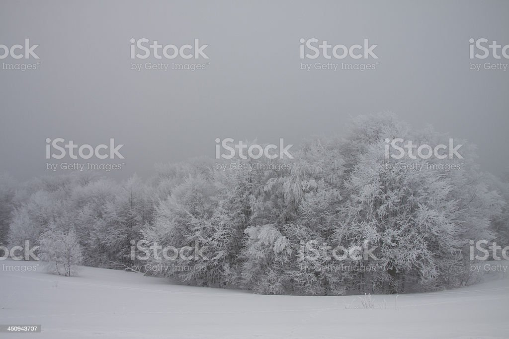Frosted trees. stock photo