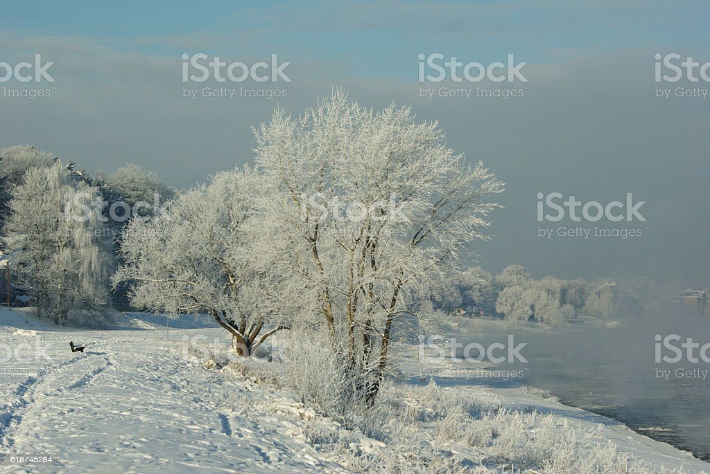 Frosted trees stock photo