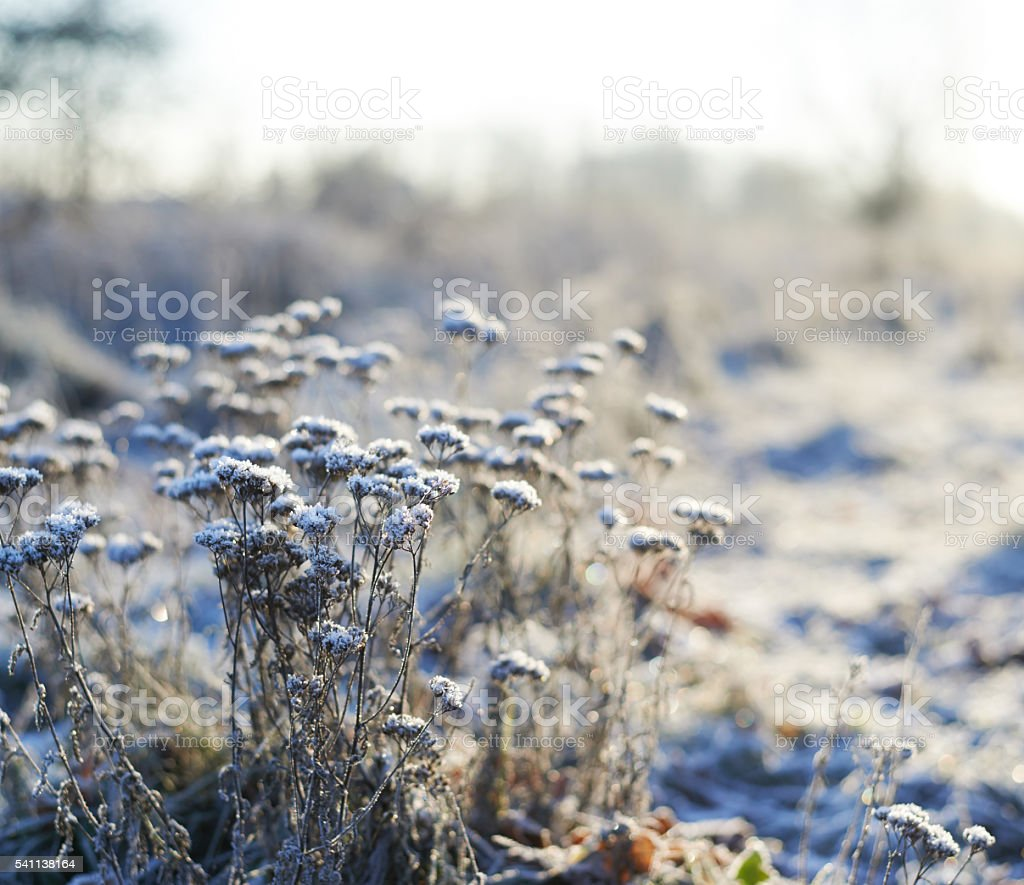 Frosted wild plants against the landscape stock photo