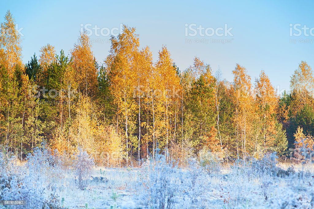 Frosts in the autumn forest in the early morning stock photo