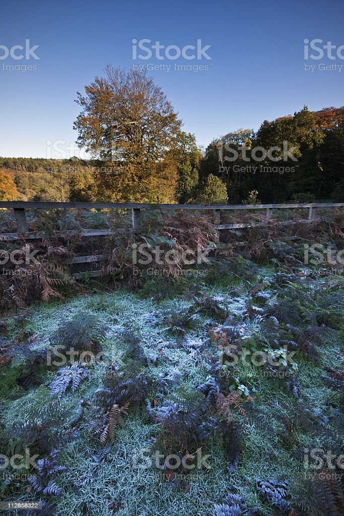 Frosty autumn morning on a rural estate royalty-free stock photo