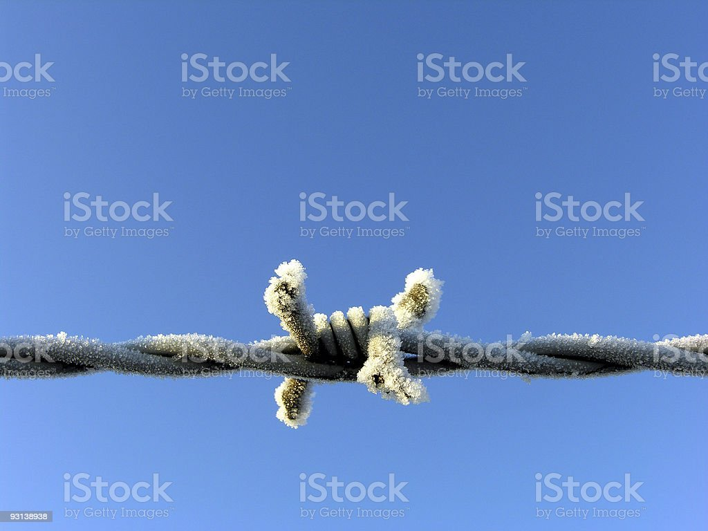 Frosty Barbed Wire royalty-free stock photo