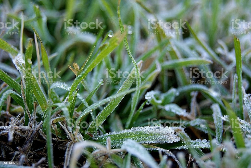 Frosty Blades royalty-free stock photo