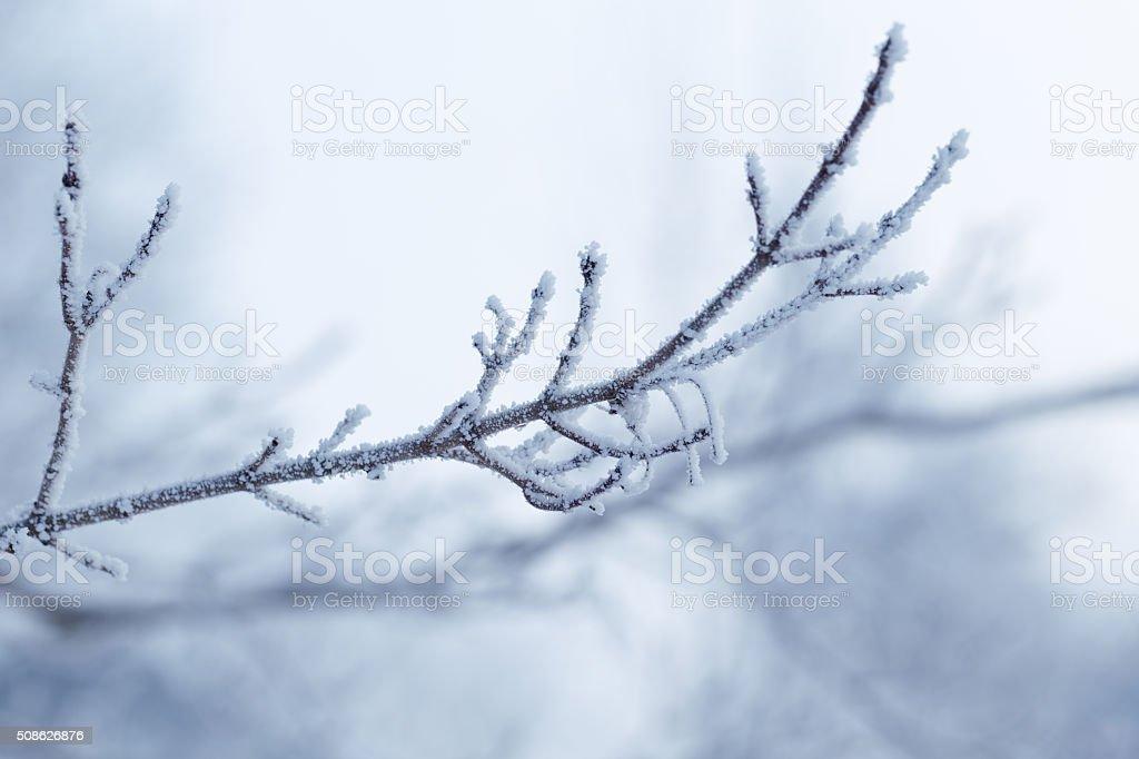 Frosty Branch stock photo