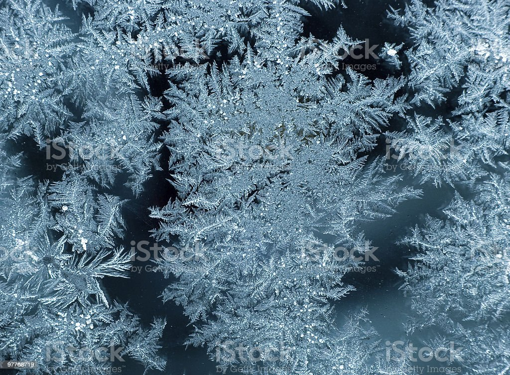 Frosty Christmas trees background royalty-free stock photo