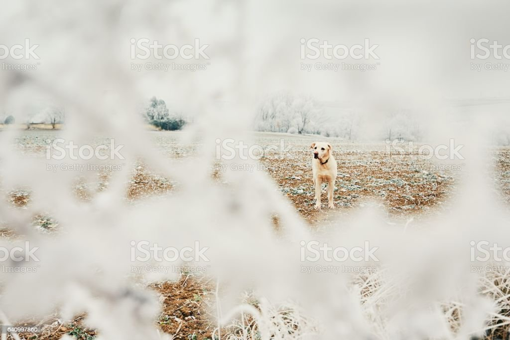 Frosty day with dog stock photo