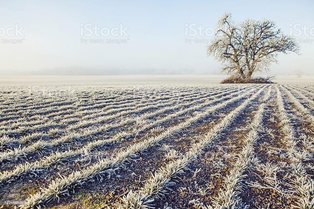 Frosty field in winter royalty-free stock photo