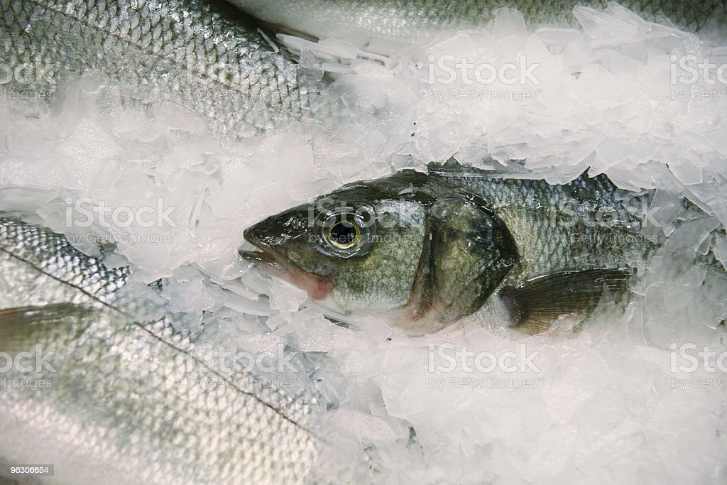 Frosty Fish royalty-free stock photo