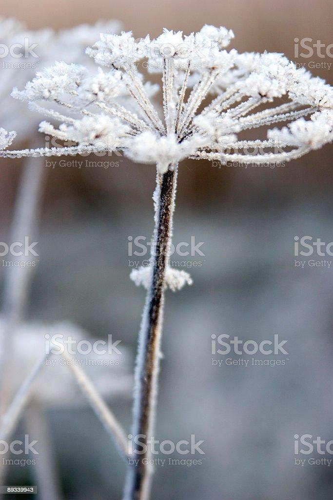 Frosty flower stock photo
