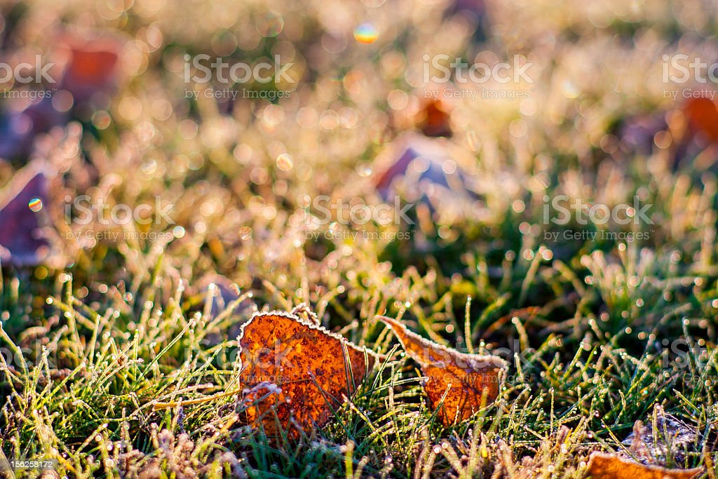 Frosty foliage and grass royalty-free stock photo