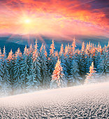 Frosty forest