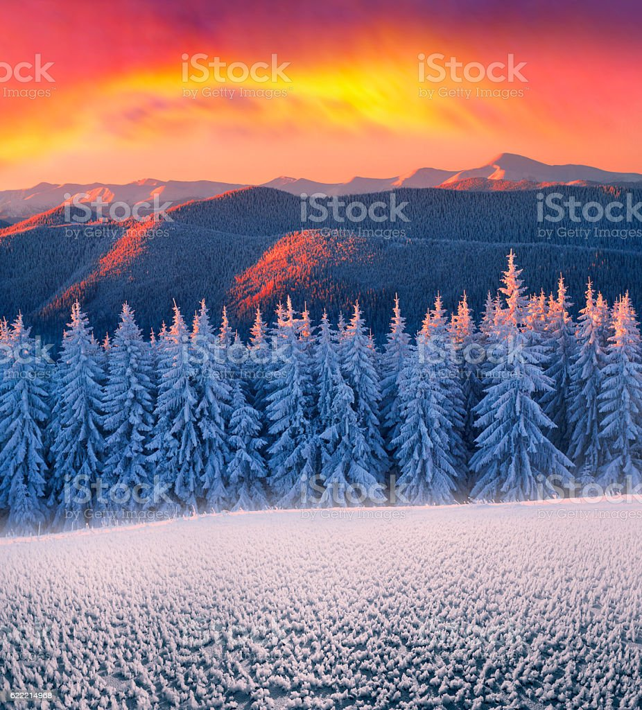 Frosty forest stock photo