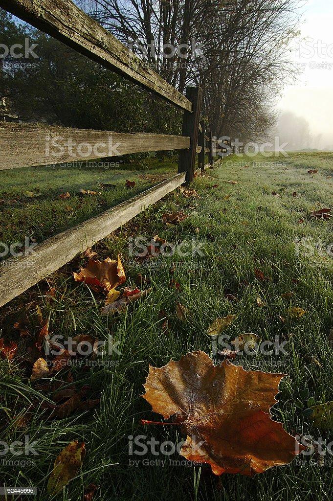 Frosty Leaf royalty-free stock photo