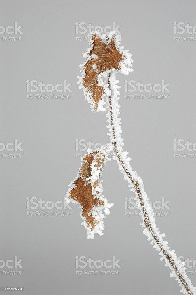Морозный листья Стоковые фото Стоковая фотография