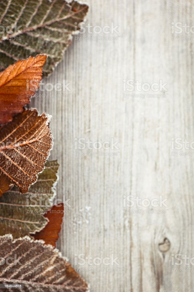 Frosty leaves. stock photo