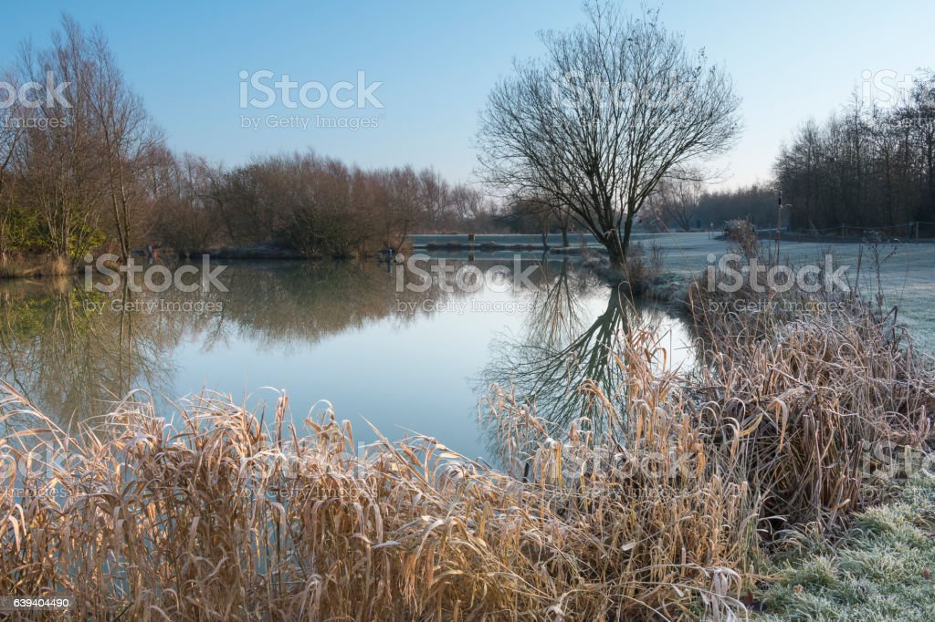 Frosty Morning By The Lake stock photo
