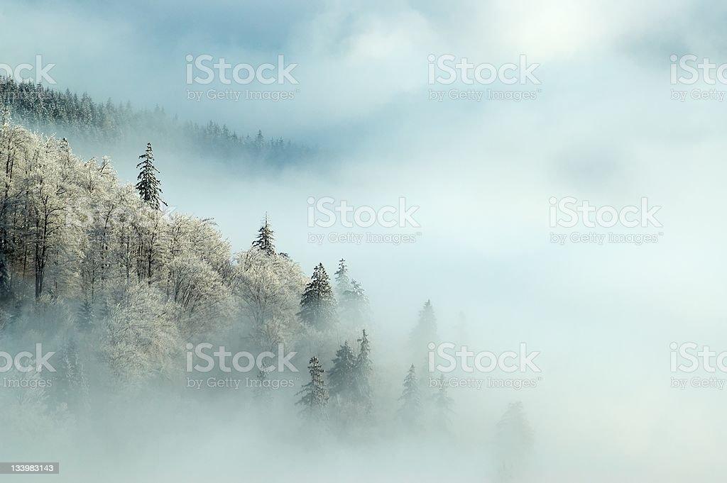 Frosty morning royalty-free stock photo