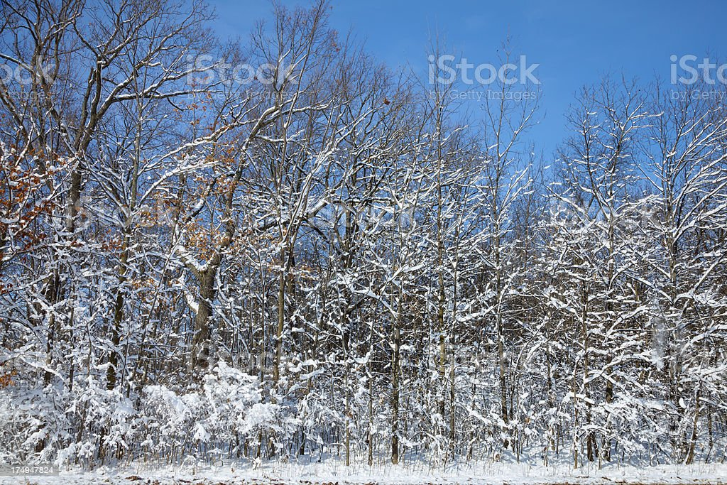 Frosty Snow Covered Forest After Blizzard royalty-free stock photo