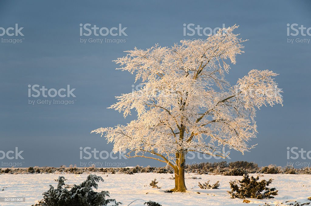 Frosty solitude tree in the first morning sunshine stock photo
