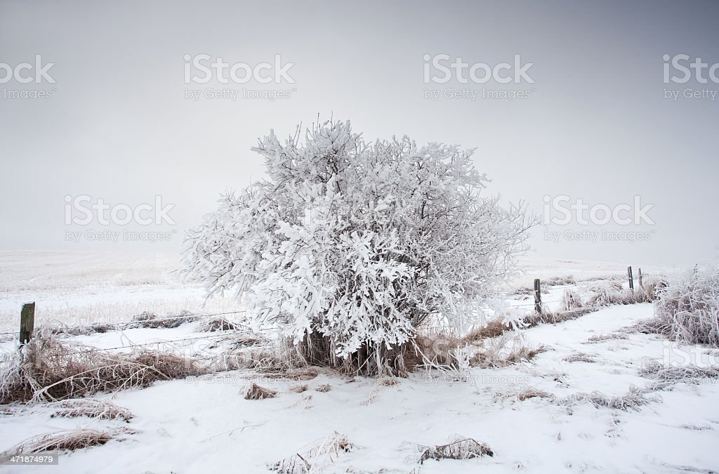 Frosty Tree and Fence royalty-free stock photo