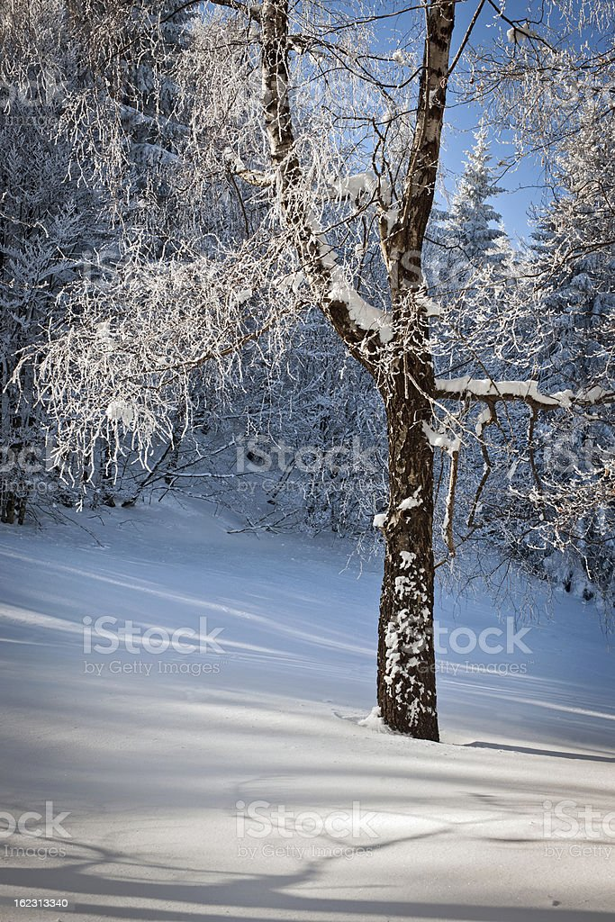 Frosty Tree Winter in Slovenia Europe stock photo