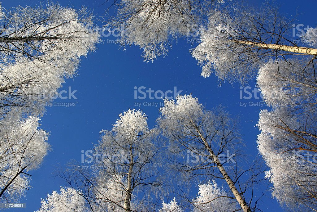 Frosty trees at the early Scandinavian winter royalty-free stock photo