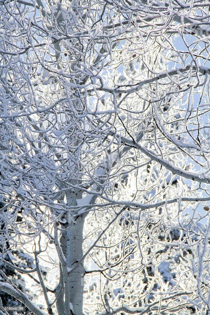 Frosty Trees II stock photo