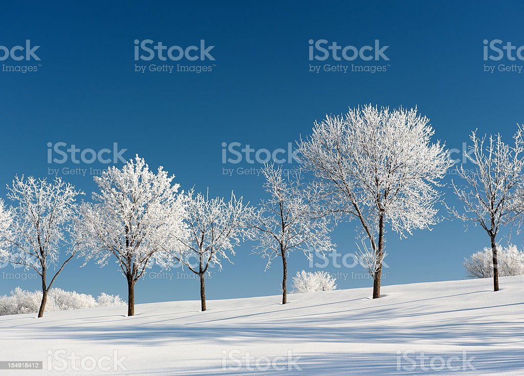 Frosty Trees on a clear Winter day royalty-free stock photo