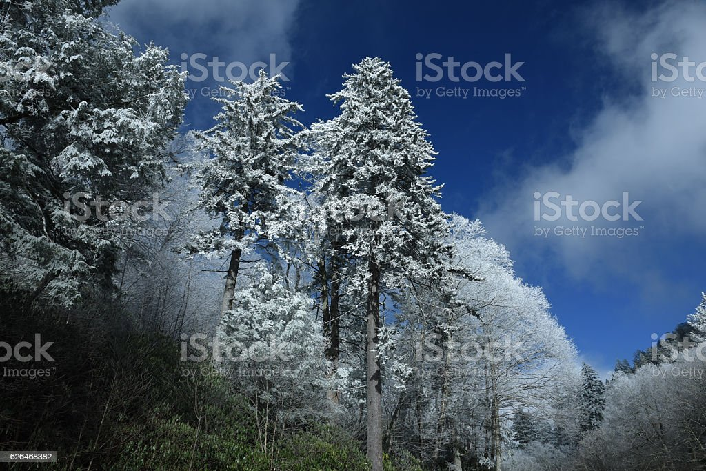 Frosty Trees stock photo