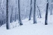 Frosty trees winter landscape