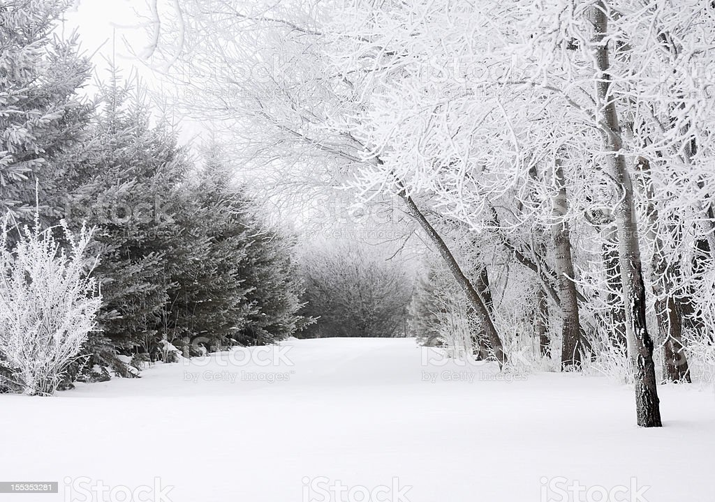 Frosty Winter Landscape royalty-free stock photo