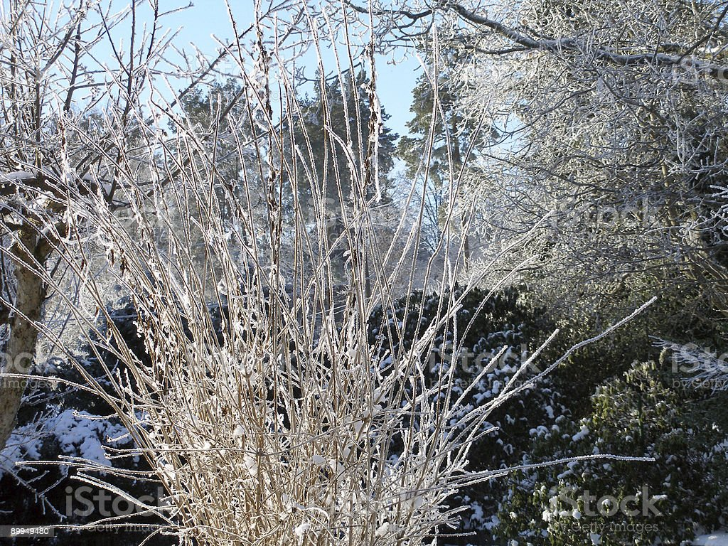 Frosty winter stock photo