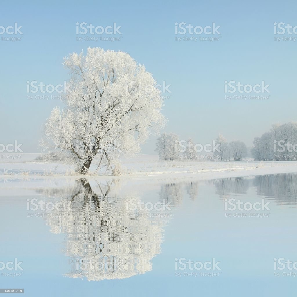 Frosty winter tree royalty-free stock photo