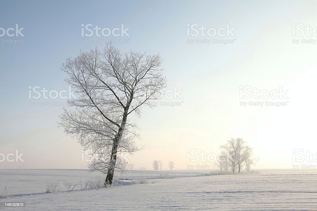 Frosty winter tree royalty-free stock photo