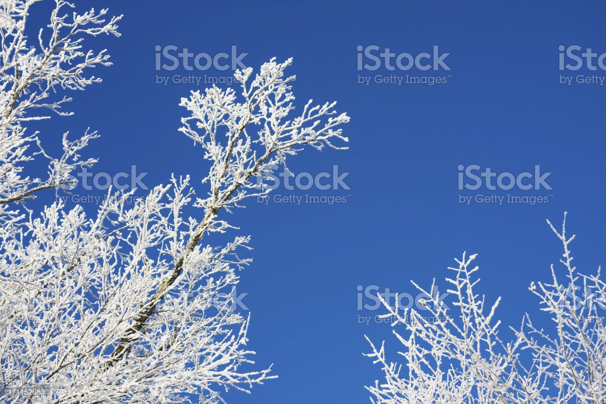 Frosty Winter Trees royalty-free stock photo