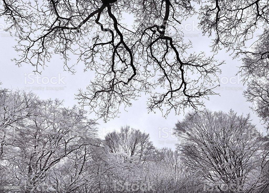 Frosty Wood stock photo