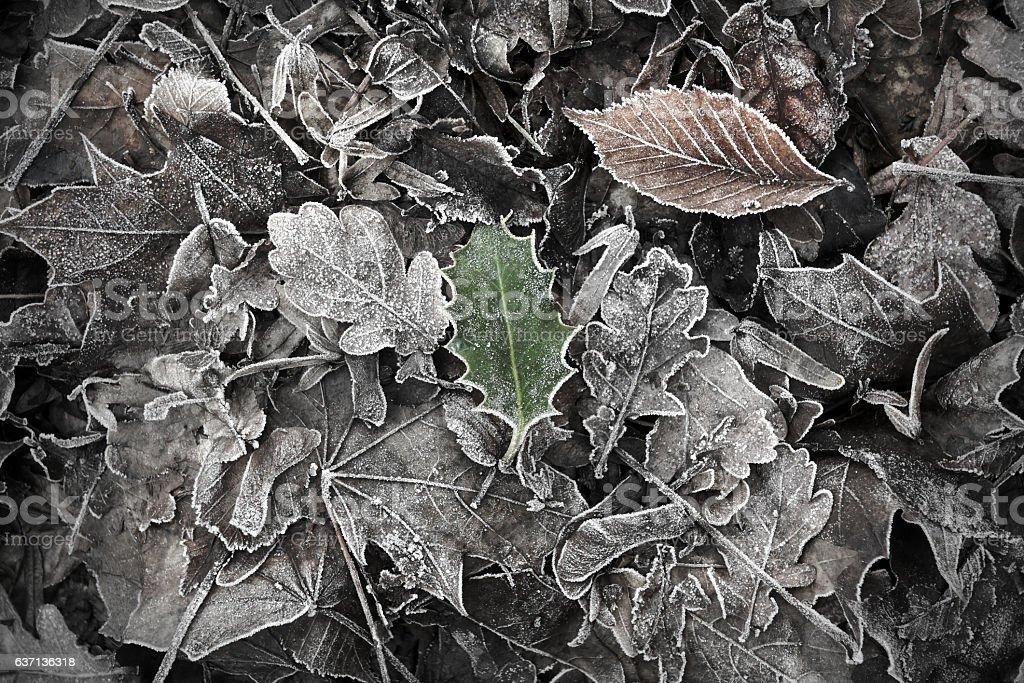Frosty Woodland stock photo