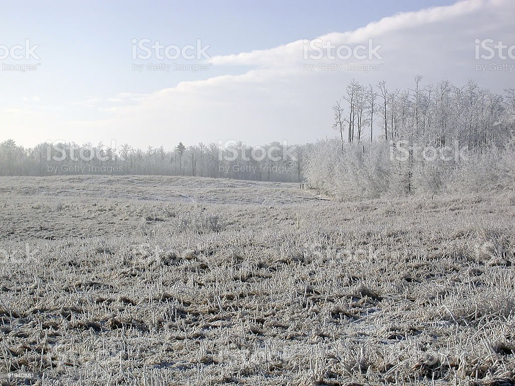FrostyStubbleField2 royalty-free stock photo