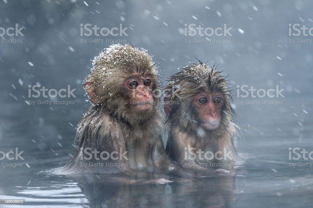 Frozen aliens stock photo