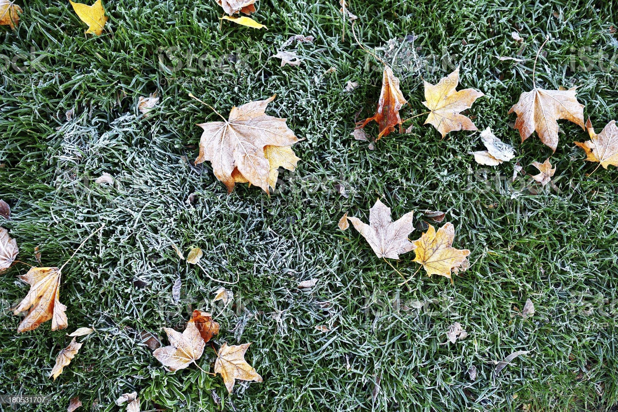 frozen autumn leafs royalty-free stock photo