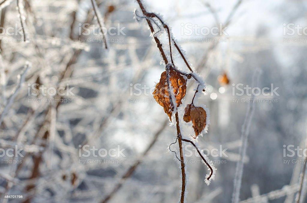 Frozen autumn leaves stock photo
