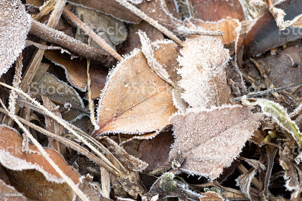Frozen autumn leaves stock photo