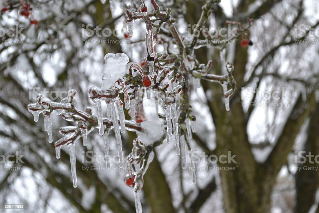Frozen berry bush stock photo