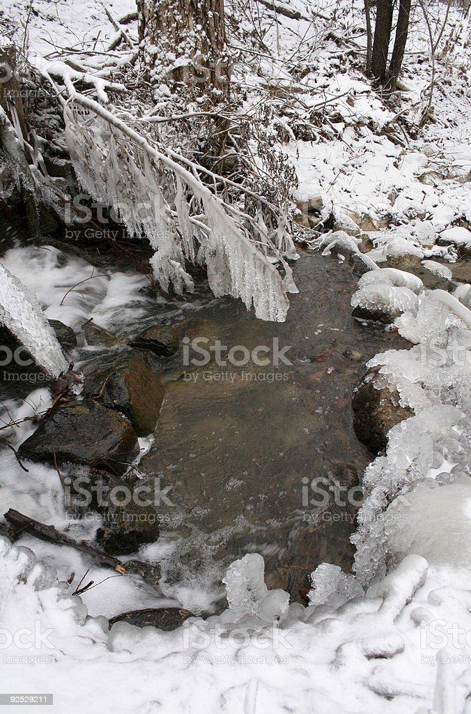 Frozen Branch royalty-free stock photo