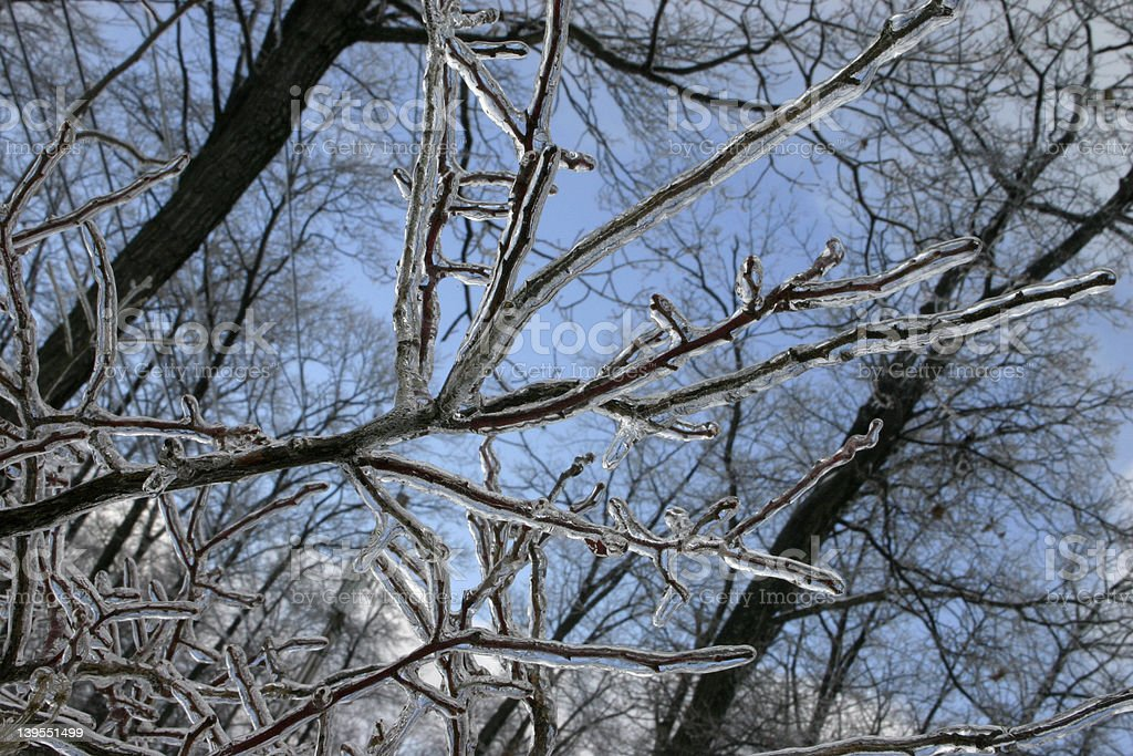 Frozen Branches beneath a Blue Sky royalty-free stock photo