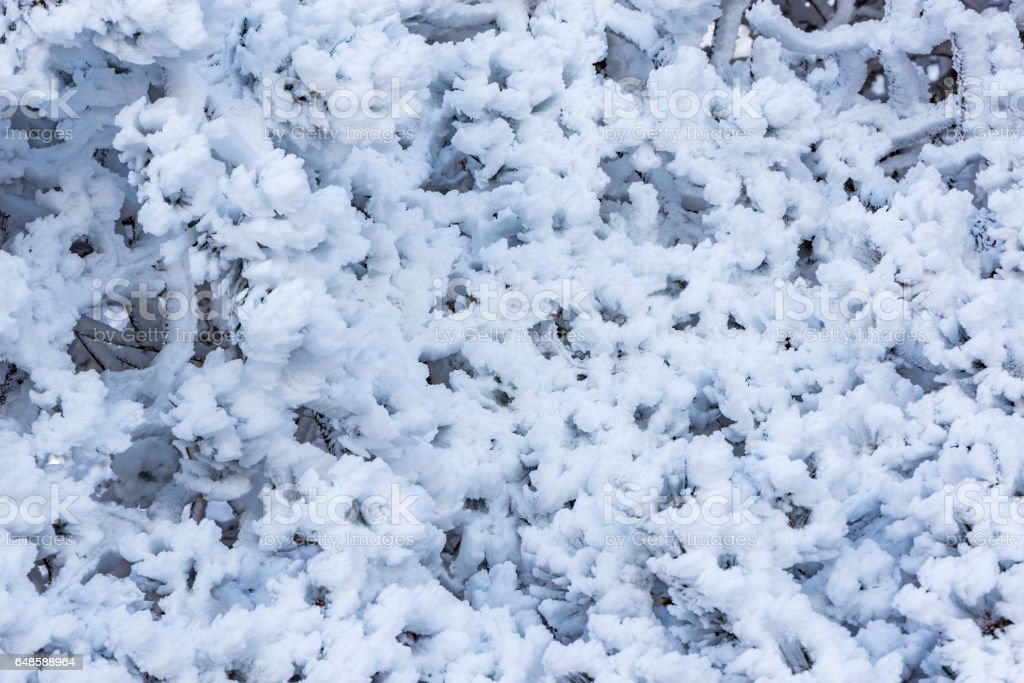 Frozen branches of the tree. stock photo